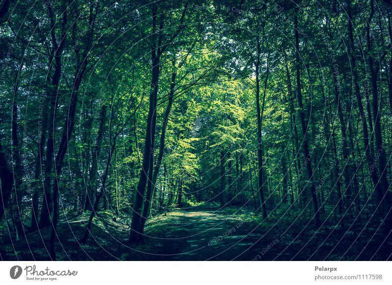 Waldlichtung Sommer Sonne Umwelt Natur Landschaft Pflanze Frühling Baum Blatt Park Wege & Pfade Wachstum dunkel frisch natürlich grün Idylle Sonnenschein