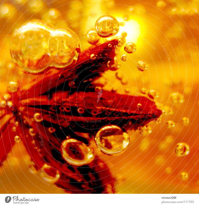 frozen poinsettia Sternanis Weihnachtsstern abstrakt Luftblase rot orange Makroaufnahme Bildausschnitt Anschnitt Detailaufnahme leuchtende Farben