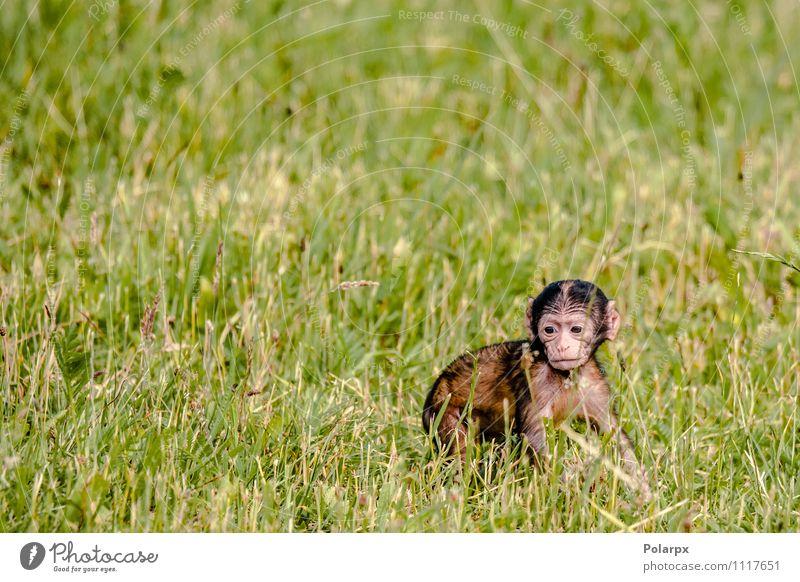 Baby Affe Essen Gesicht Kind Mann Erwachsene Zoo Natur Tier Baum Gras Pelzmantel Behaarung sitzen lustig niedlich wild braun Einsamkeit Hintergrund reif