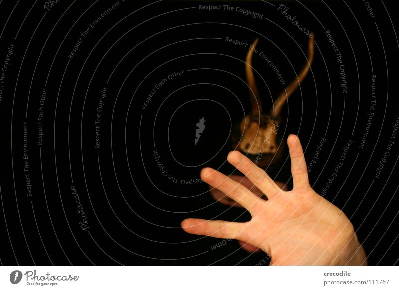 wolpertinger lV Hand dunkel Mund Angst Arme Finger gefährlich bedrohlich Schutz Jagd Horn Hirsche Panik grell frontal Tarnung