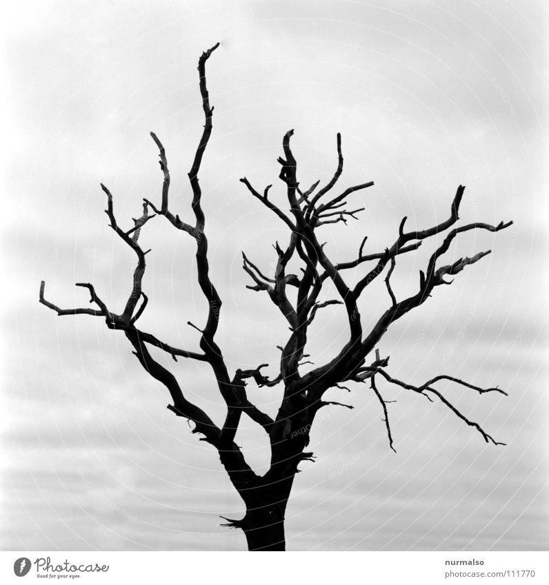 On the dark side of the tree dunkel unfassbar unheimlich Schattendasein Baum Am Rand böse Apokalypse Ausbruch Atomkrieg Bombe Terror Hiroshima laublos Herbst