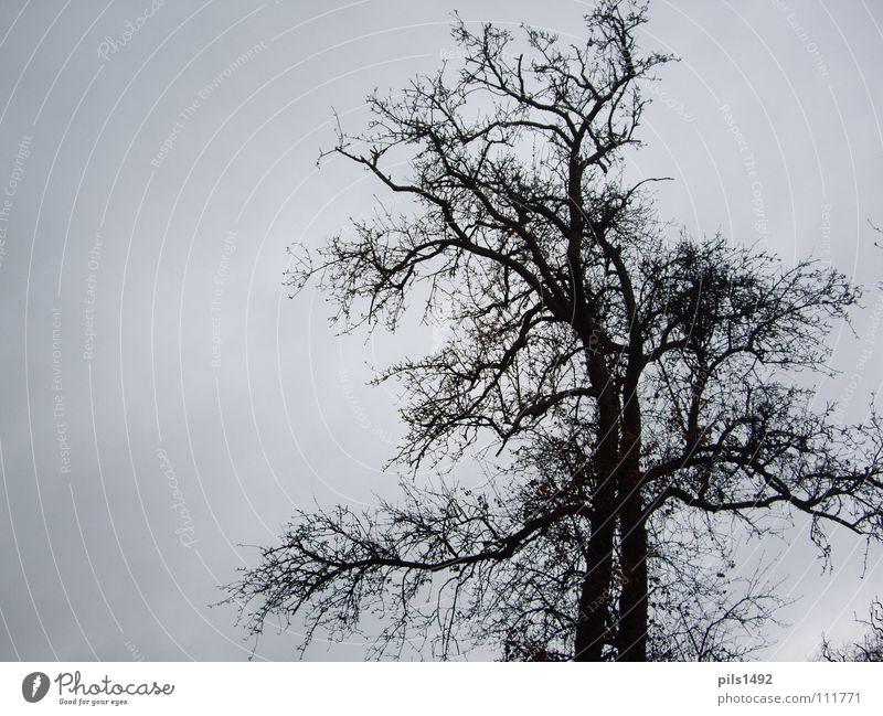 Baum,kahl,herbstlich Himmel Baum Winter dunkel kalt Herbst Ast Baumrinde