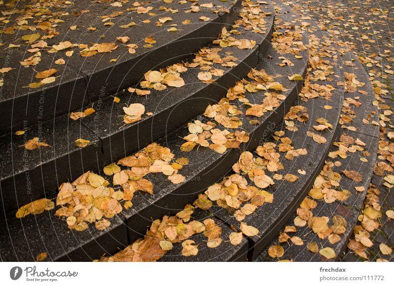 Stolperfalle Wasser grün Blatt Wolken gelb Straße kalt Herbst Stein Regen Linie braun nass Beton