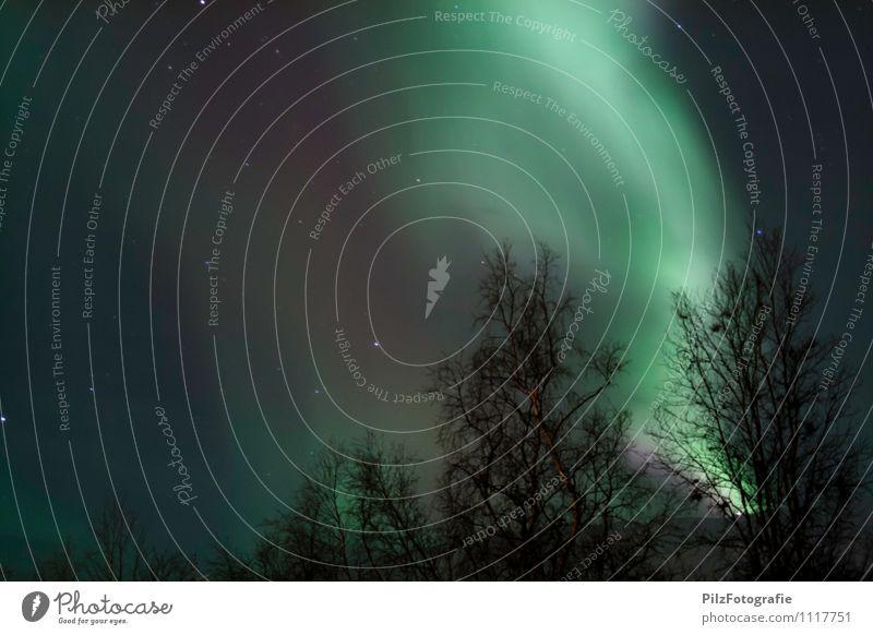 Aurora in Abisko 1 Landschaft Himmel Wolkenloser Himmel Nachthimmel Stern Winter Wald gigantisch grün violett weiß Natur aurora borealis Nordlicht Schweden