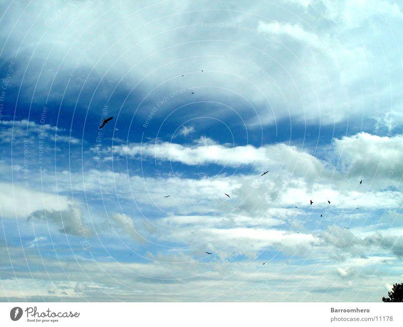 i like birds Himmel Wolken Freiheit Vogel fliegen Verkehr Schweiz