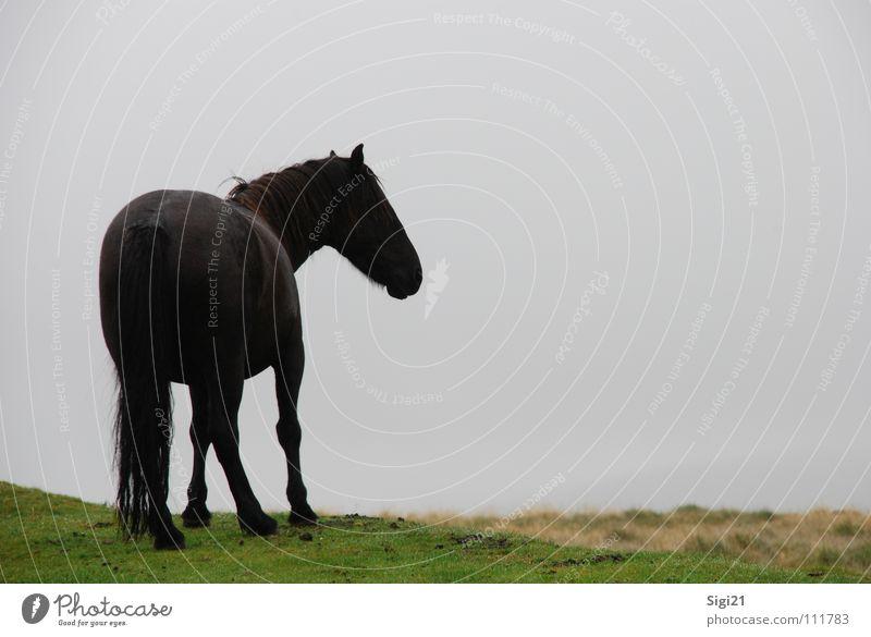 Blick ins Dartmoor Mähne Pferd Schwanz Tier Wiese Anmut dunkel Körperhaltung schön stehen geschmackvoll Säugetier Landschaft Perspektive elegant warten