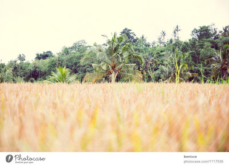 Reiszeit Bali Ubud Asien Indonesien Reisfeld grün Feld Ferien & Urlaub & Reisen Landwirtschaft Reisernte tropisch Reisefotografie Natur Aussaat Saatgut