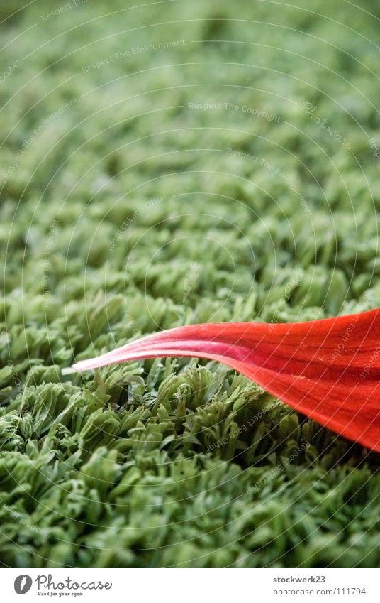 jump grün Kunstrasen Blatt rot Gras Sommer Rasen Spitze artifiziell Natur