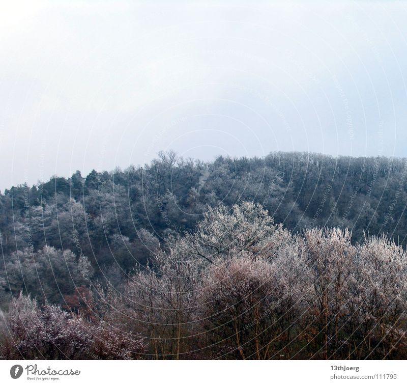 FrostWald Baum kalt frieren Winter Baumkrone Umwelt Farbe blau Strukturen & Formen Schnee Natur Landschaft