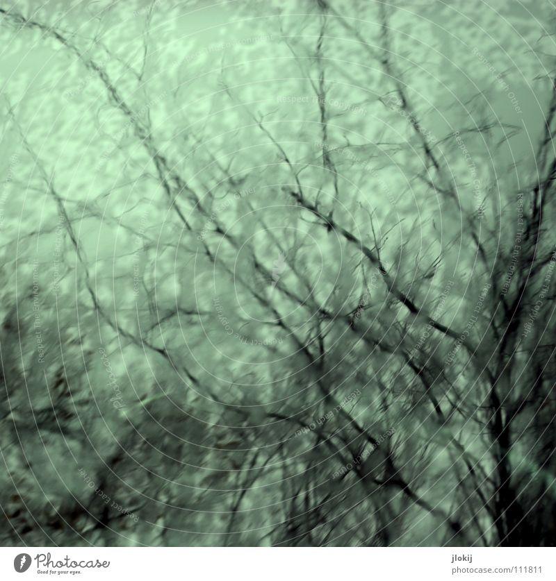 Verzweigt Baum Regen Herbst nass feucht verzweigt durcheinander Sträucher Geäst Himmel Unschärfe Reflexion & Spiegelung Lack Wetter blau Ast Zweig tree autumn
