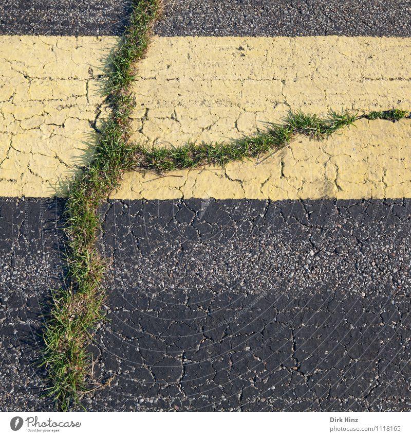 Leben im Asphalt Umwelt Natur Pflanze Gras Straße Wege & Pfade gelb grau grün Entschlossenheit Erfolg Hoffnung Leistung Optimismus planen Überleben
