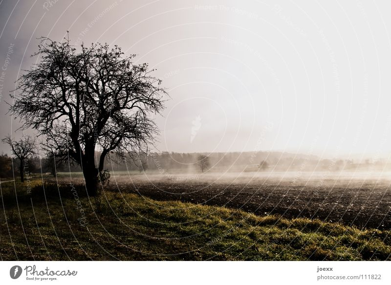 Energieaufnahme Baum Bodennebel Erholung Herbst Idylle Morgen Denken Nebel Nebelwand unklar poetisch Romantik ruhig Sonnenenergie Sonnenlicht Sonnenstrahlen