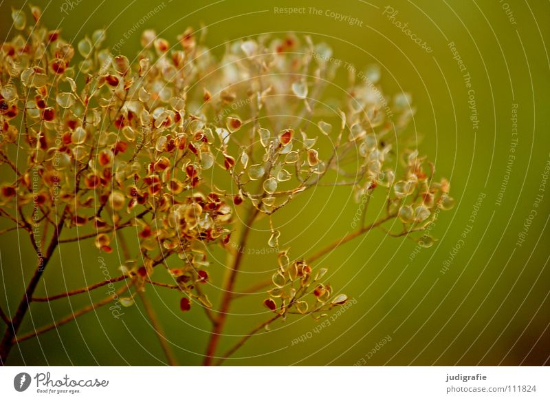 Wiese Pflanze Herbst trocken Umwelt zart Farbe getrocknet Wildtier Natur Samen