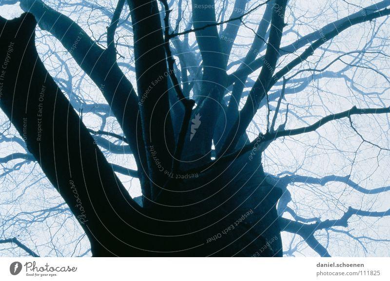 die Blätter sind ab (Teil 2) weiß Baum blau Winter schwarz Wolken dunkel Herbst grau Nebel Hintergrundbild Wetter Perspektive bedrohlich Ast Buche