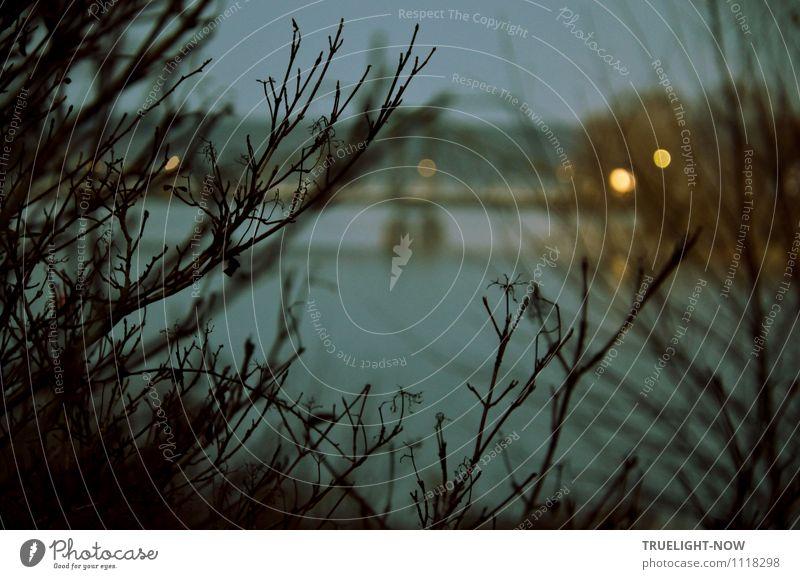 Glienicker (Agenten-)Brücke Himmel Natur blau Pflanze Wasser Landschaft dunkel Umwelt gelb Herbst braun Park Luft Angst Sträucher Technik & Technologie