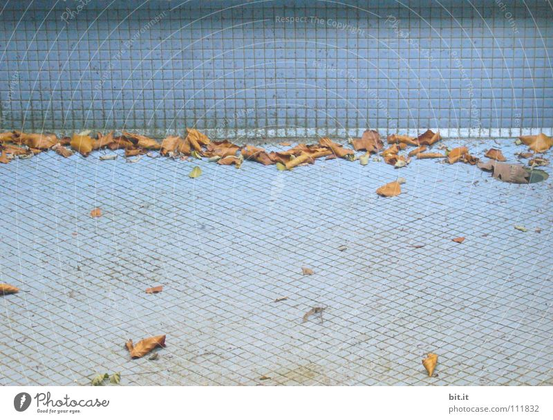 SAISONENDE blau Blatt Einsamkeit Ferne Straße kalt Wand Herbst Wege & Pfade Sand braun liegen geschlossen leer Boden Bodenbelag