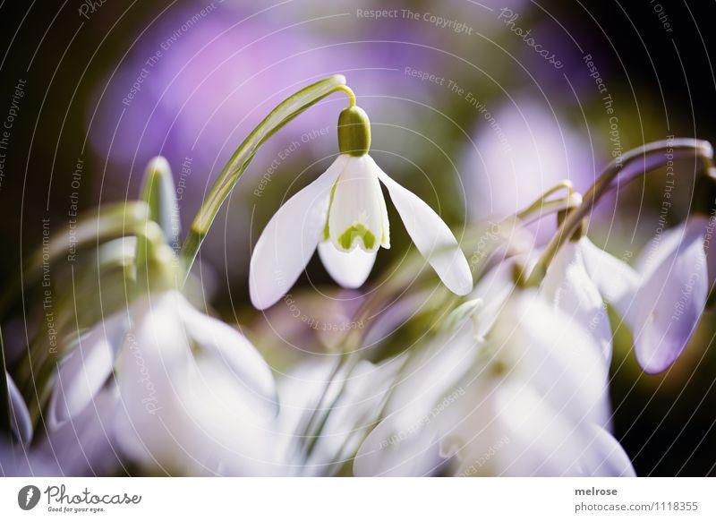 nimma lange Natur grün schön weiß Blume Erholung Blatt schwarz Blüte Frühling Gras Stil Garten außergewöhnlich träumen leuchten