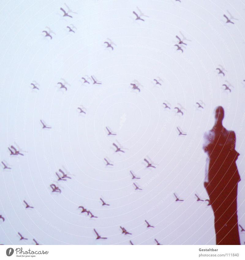 Schattenspiel 17 Mensch Frau Freude ruhig Bewegung Denken Vogel fliegen frei Perspektive stehen geheimnisvoll Aussicht Ausstellung Schwarm Projektionsleinwand
