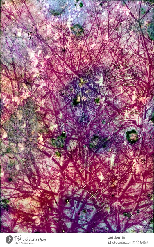Kirschblüte Natur Farbe Frühling Blüte Hintergrundbild Sträucher Ast Fotografie kaputt geheimnisvoll Zweig Bild Riss Zerstörung unklar Dia