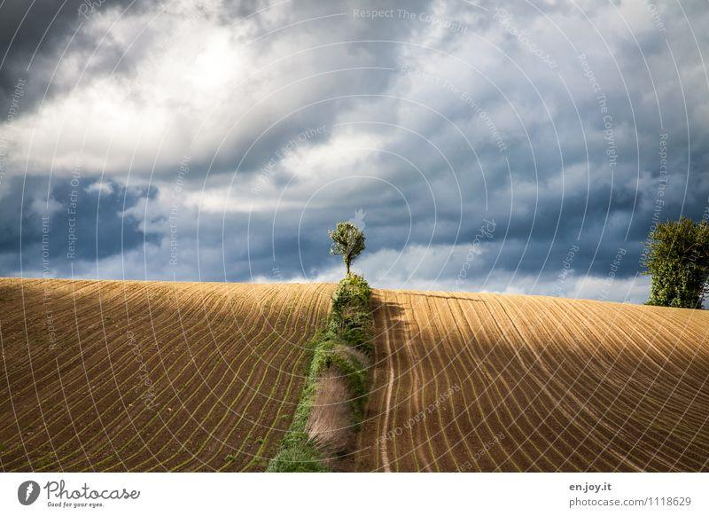 Licht und Schatten Landwirtschaft Forstwirtschaft Natur Landschaft Pflanze Himmel Wolken Gewitterwolken Horizont Sonnenlicht Frühling Sommer Klima
