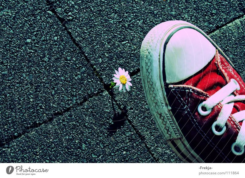 Be Aware! Natur Blume Schuhe Chucks Gänseblümchen Turnschuh Moral
