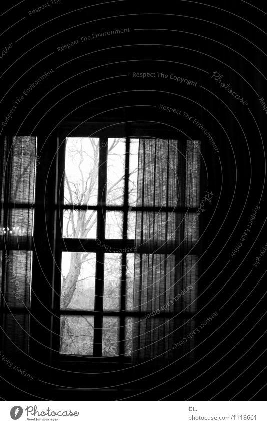 fenster Häusliches Leben Raum Baum Mauer Wand Fenster Vorhang Gardine dunkel gruselig Fernweh Einsamkeit Schwarzweißfoto Innenaufnahme Menschenleer