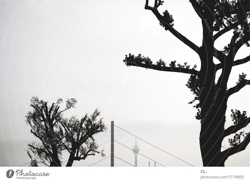 düsseldorf Tourismus Städtereise Umwelt Natur Himmel Baum Ast Düsseldorf Stadt Brücke Sehenswürdigkeit Wahrzeichen Rheinturm Schwarzweißfoto Außenaufnahme