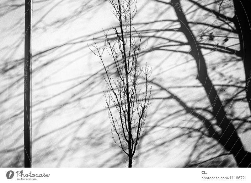 schatten Umwelt Natur Herbst Winter Schönes Wetter Baum Zweige u. Äste Mauer Wand karg Schwarzweißfoto Außenaufnahme Menschenleer Tag Licht Schatten Kontrast