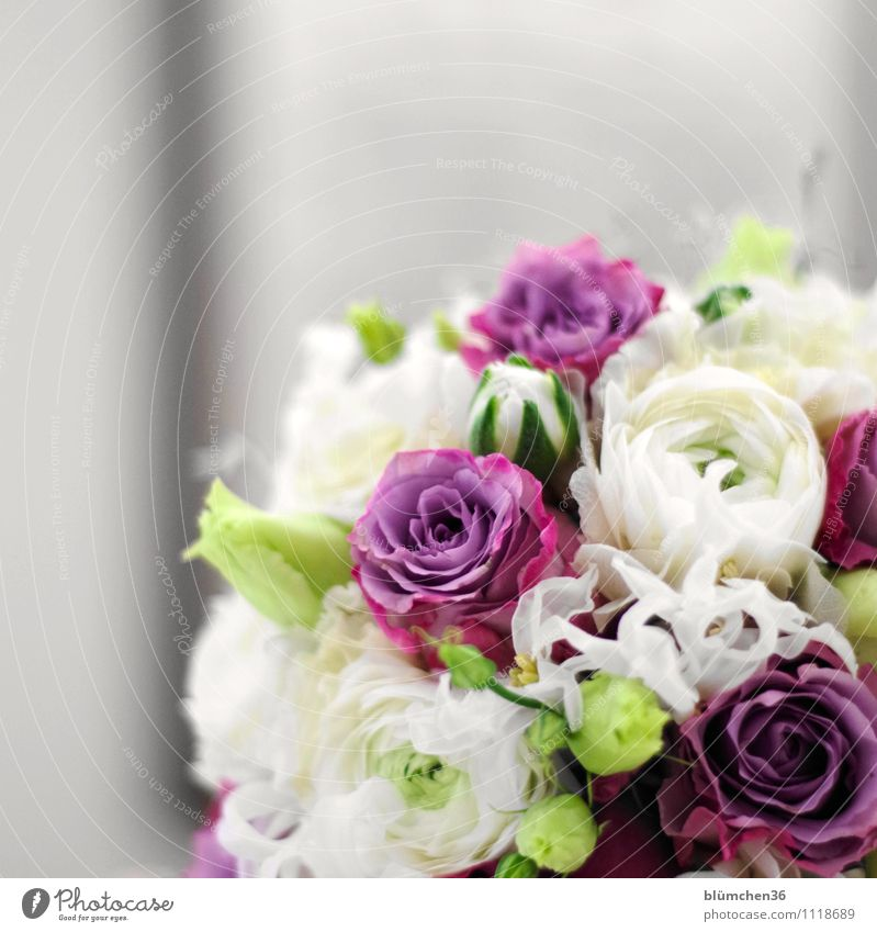 Mitbringsel Pflanze Blume Blüte Blumenstrauß Rose Ranunkel Blühend Duft natürlich mehrfarbig Freude Glück Frühlingsgefühle Muttertag Geburtstag Valentinstag
