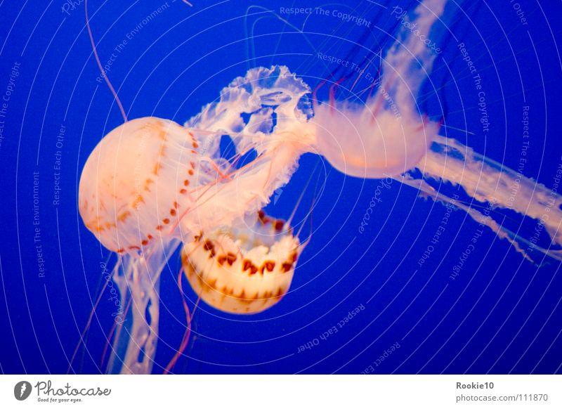 Fremde Welt 2 fremd Meer unheimlich faszinierend gefährlich Wasser Aquarium unberührt leicht blau Erde Bewegung sanft