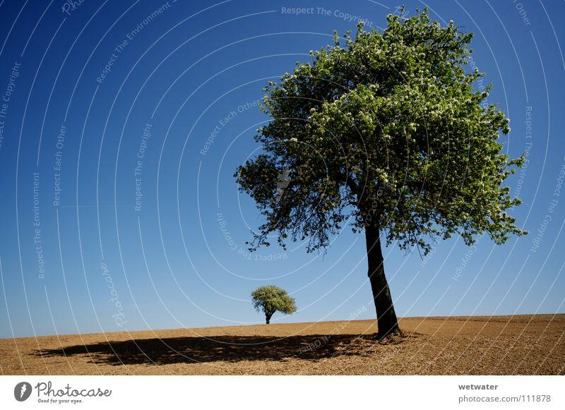 Desert trees Baum grün Einsamkeit Sommer Frühling Feld springen Wüste desert blue blau Himmel lonely landscape Landschaft field Erde dirt dust