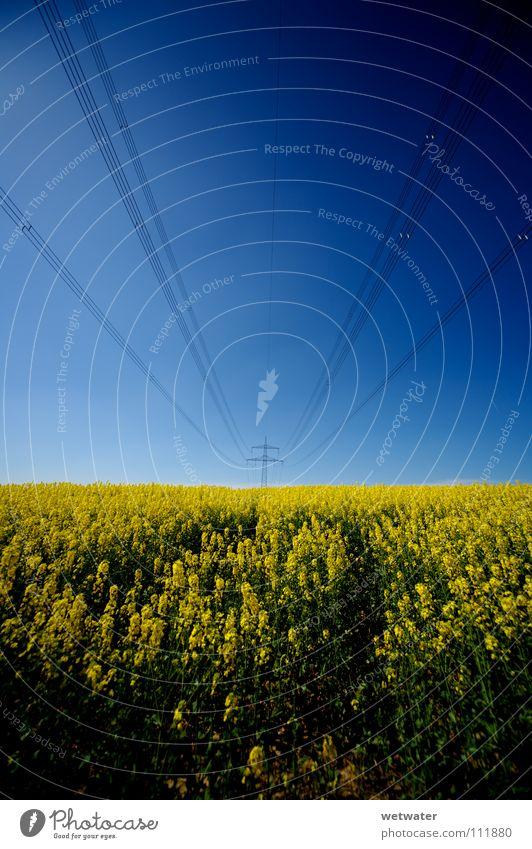 fields of gold Himmel blau Sommer springen Frühling Kraft Feld Kraft Elektrizität Dienstleistungsgewerbe ökologisch Draht Raps Hochspannungsleitung alternativ
