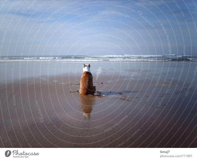Sehnsucht Meditation Meer Strand Hund Tier Trauer Ausdauer Konzentration Säugetier warten Wasser Sand geduldig Imagination