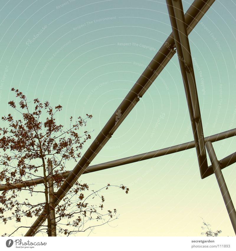 lichtarchitektur I Licht Lampe dehydrieren Winter Blatt fallen Raum Froschperspektive Leuchtstoffröhre Stahl Kunst Sträucher erleuchten Abend kalt streng