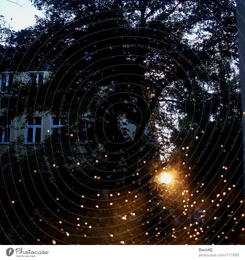 draußen Baum Sonne Haus Straße Fenster Regen Wassertropfen Langeweile Hinterhof Innenhof Unlust