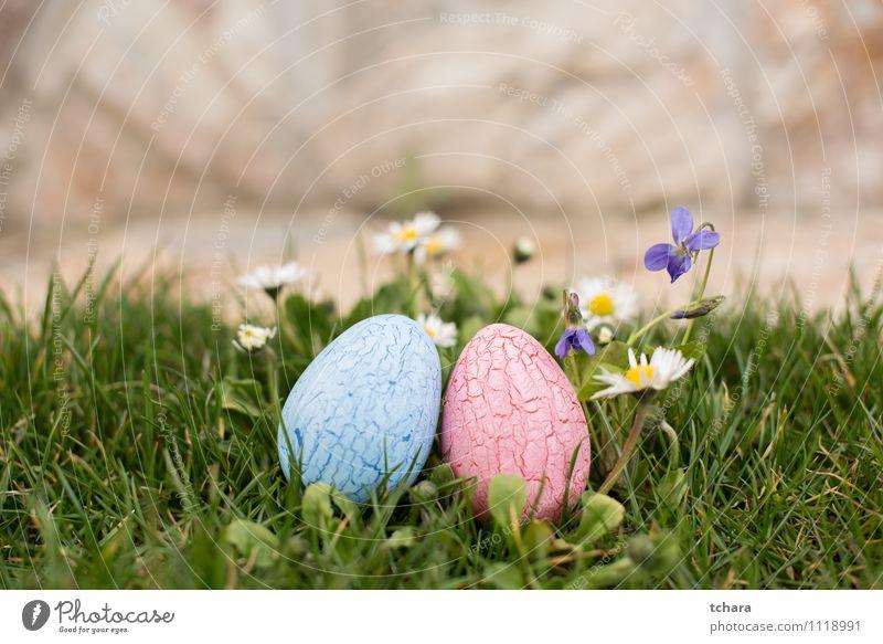 Ostereier Garten Ostern Natur Frühling Blume blau rosa Religion & Glaube Tradition Ei gemalt dekoriert farbenfroh zwei Objekte violett Gänseblümchen Jagd Ostern