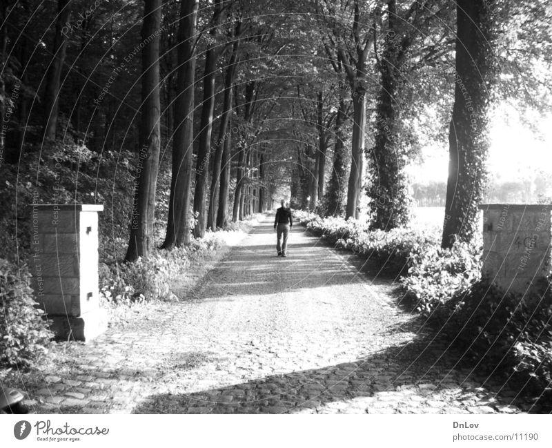 lonely Frau Mensch Baum Einsamkeit Allee