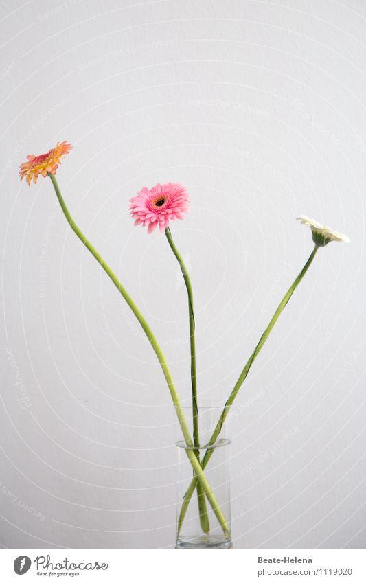Griefs Infernal Flower - Microsoft Store