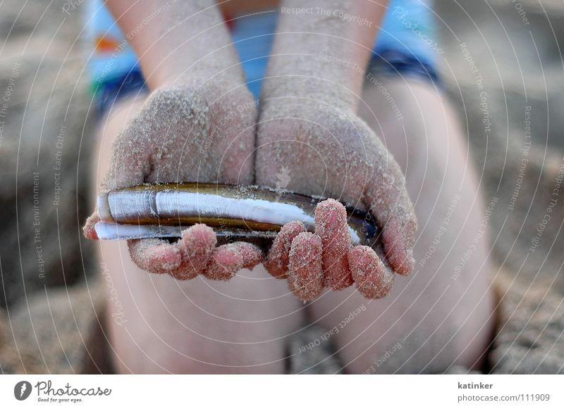 dots on the shells Meer Hand Sand Stimmung Fisch Muschel