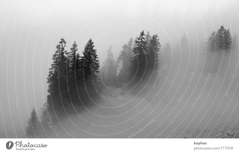 Finsterwald Wald Tanne Baum Nadelbaum Nebel Winter kalt dunkel mystisch gruselig Einsamkeit Berge u. Gebirge Schnee Angst Schwarzweißfoto