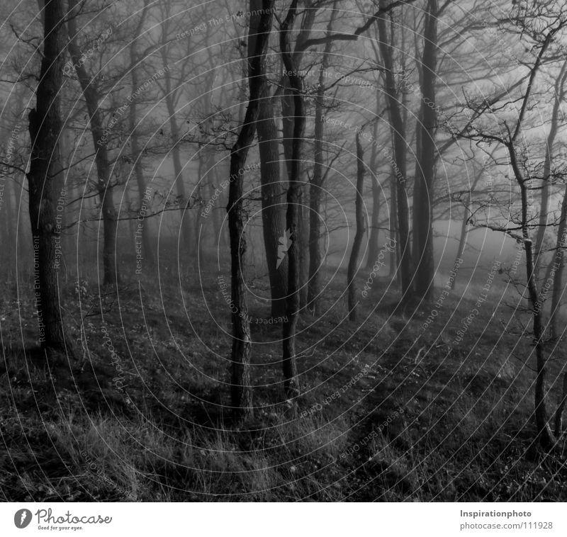 Verlaufen schwarz Wald Baum Blatt Herbst Nebel Schwarzweißfoto weis Wege & Pfade