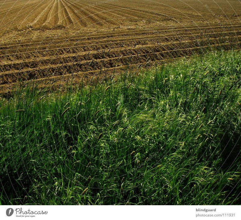Agrarökonoms Spielplatz Natur grün Pflanze Sommer Arbeit & Erwerbstätigkeit Herbst Gras Linie braun 2 Feld Umwelt Erde Europa Kultur Landwirtschaft