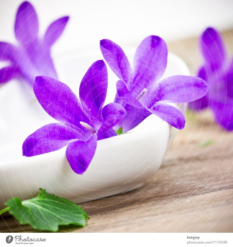 lila Blümchen Natur Sommer Blume Erholung Freude Blüte Frühling Gesundheitswesen rosa frisch Dekoration & Verzierung Geburtstag Ostern Wellness Postkarte