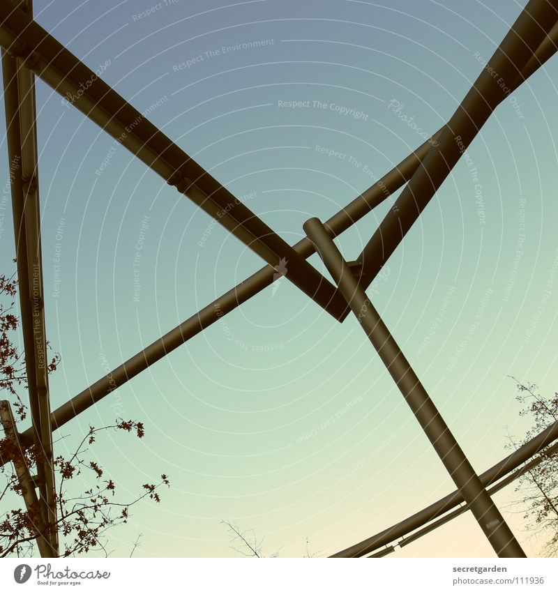 lichtarchitektur II Himmel blau Winter Blatt Straße kalt Graffiti Wege & Pfade Lampe hell Kunst Beleuchtung Raum Platz Dekoration & Verzierung Coolness