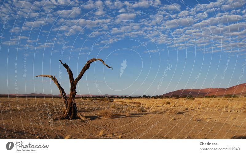 Toter Baum Wolken Tod Afrika Wüste dünn Vergänglichkeit trocken Stranddüne Ödland Fetzen