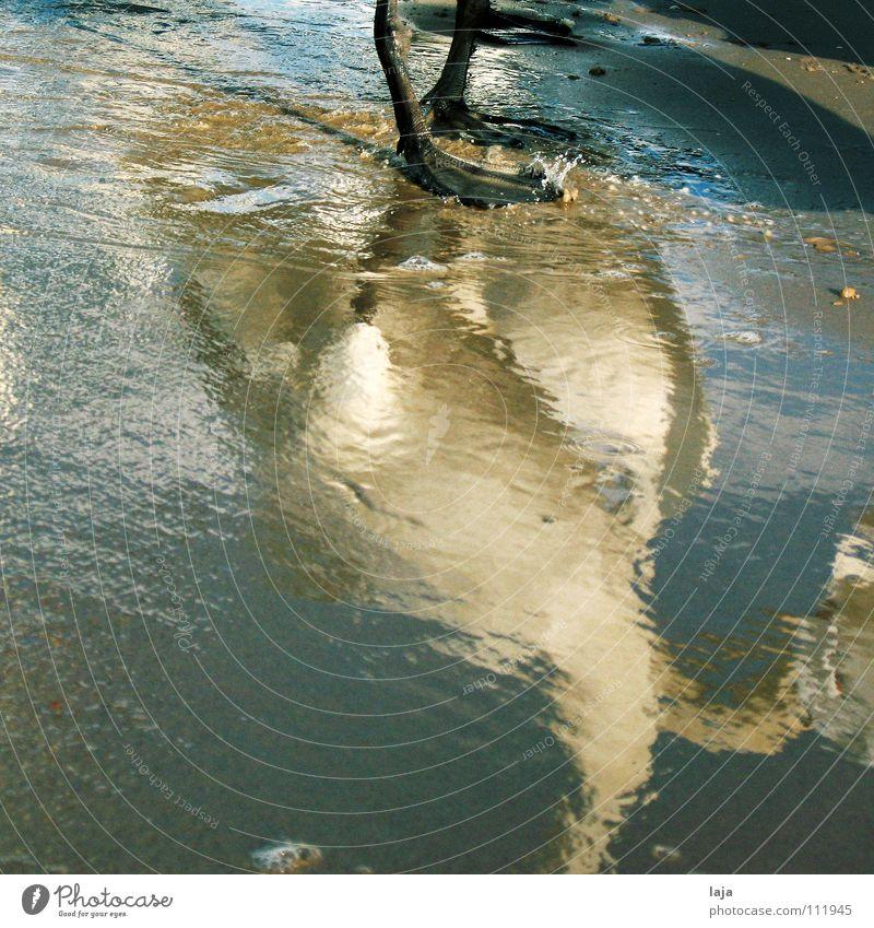 Plitschplatsch Schwan Tier Feder Vogel Wasser Sand Strand Meer Ostsee Spiegelbild Schaum eitel Reflexion & Spiegelung Tierfuß Küste schön