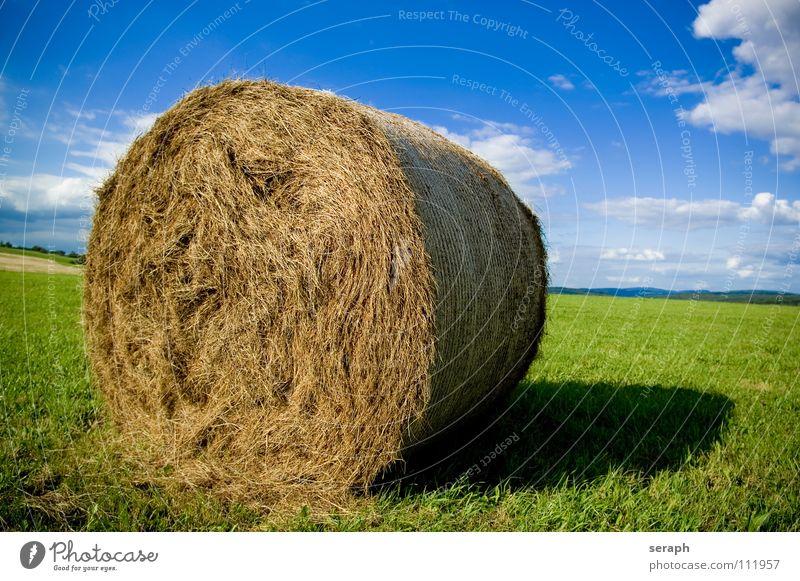 Strohballen Heu Heuballen Rolle rollen Feld Wiese Himmel Sommer Landwirtschaft Futter Frucht Gras Halm Ernte einfuhr Getreide verpackt einpacken Natur Wolken