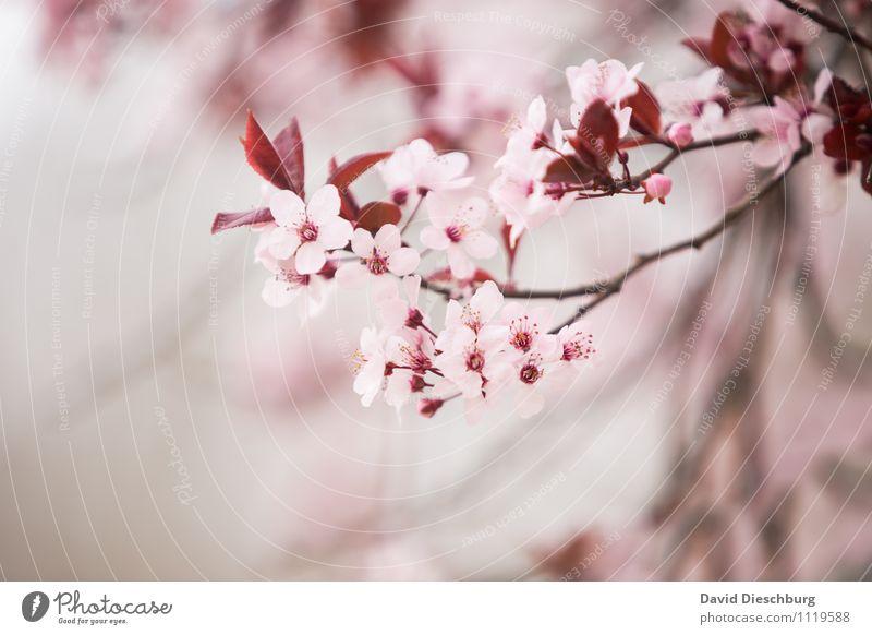 Blütezeit Natur Ferien & Urlaub & Reisen Pflanze schön Sommer weiß Blatt Tier Wald Frühling Garten rosa Park Ast Schönes Wetter
