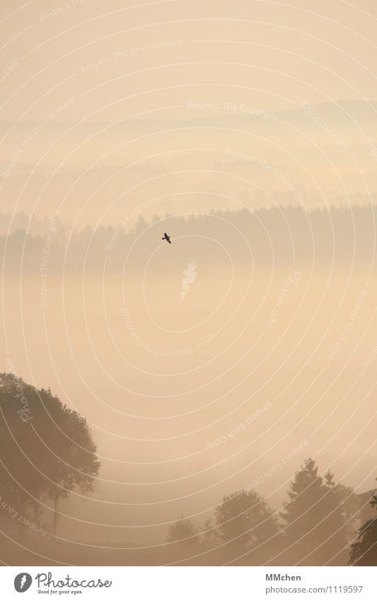 Schwerelos Natur Ferien & Urlaub & Reisen Baum Landschaft ruhig Ferne Wald Freiheit fliegen Vogel Horizont Feld Nebel Ausflug Abenteuer Romantik
