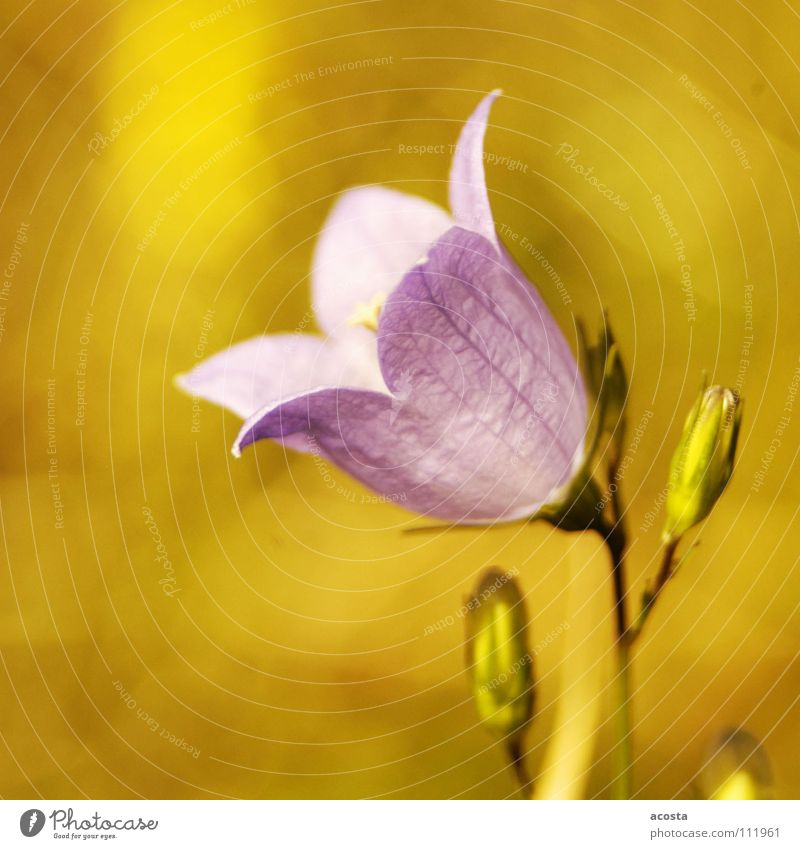 lila_sommer Blume grün Sommer Wiese Wärme violett Physik
